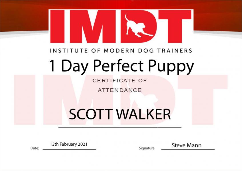 IMDT - Perfect Puppy